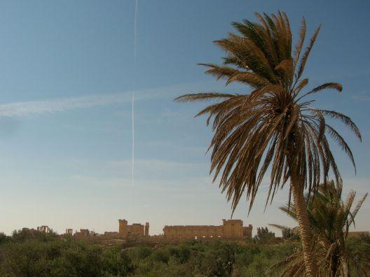 Palmyra24