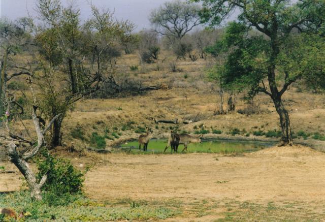 Water Bucks
