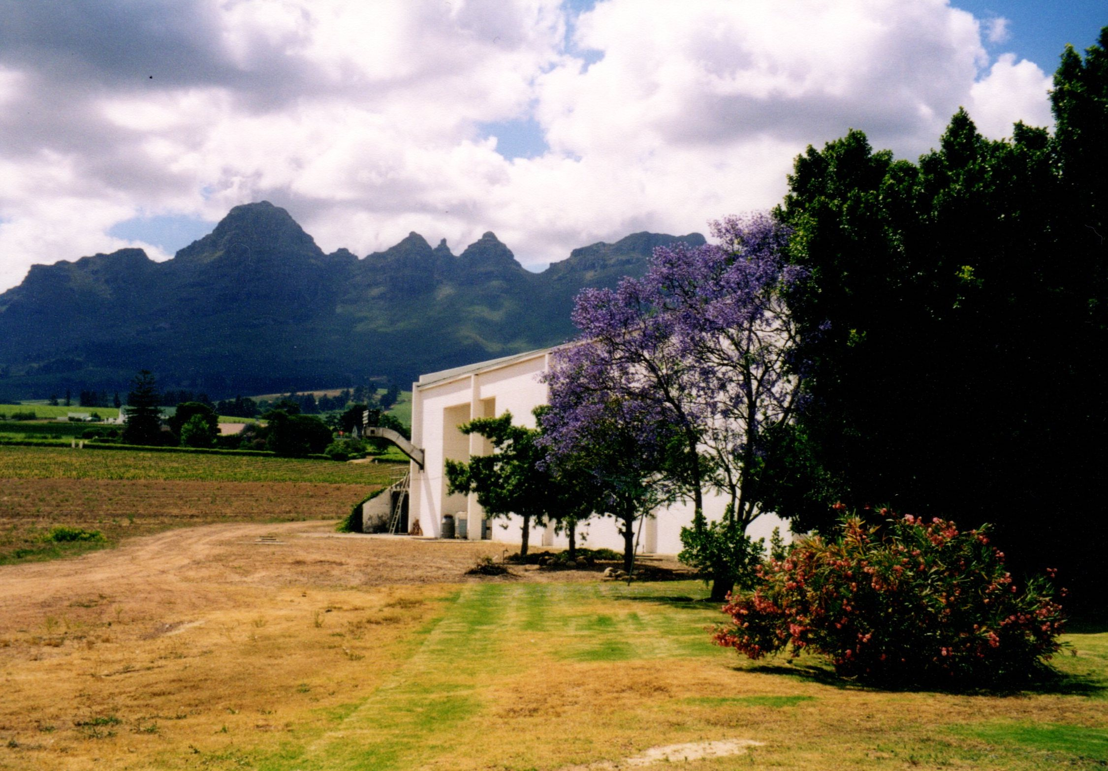 Seidelberg Vineyard Near Paarl