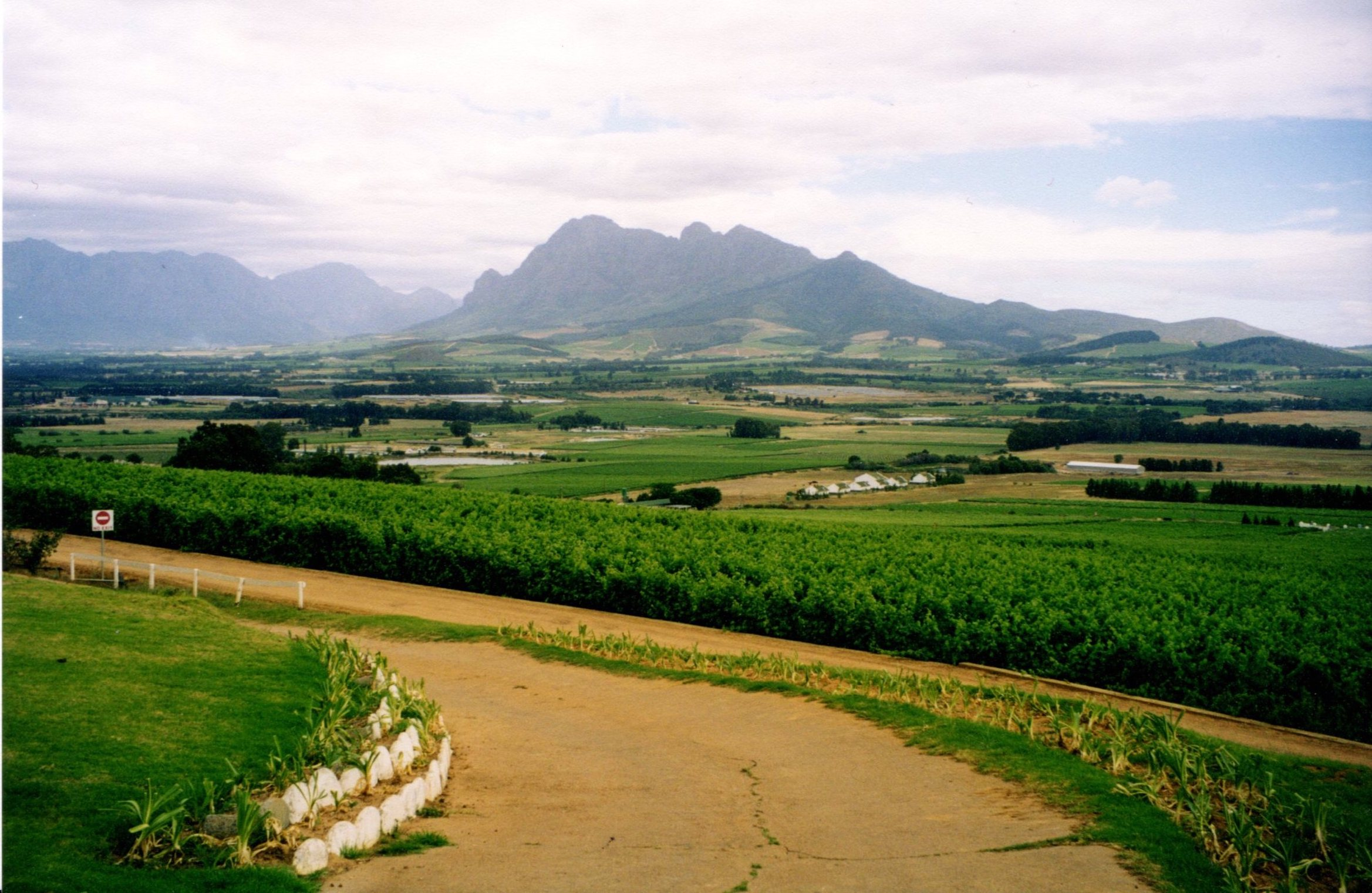 Seidelberg Vineyard