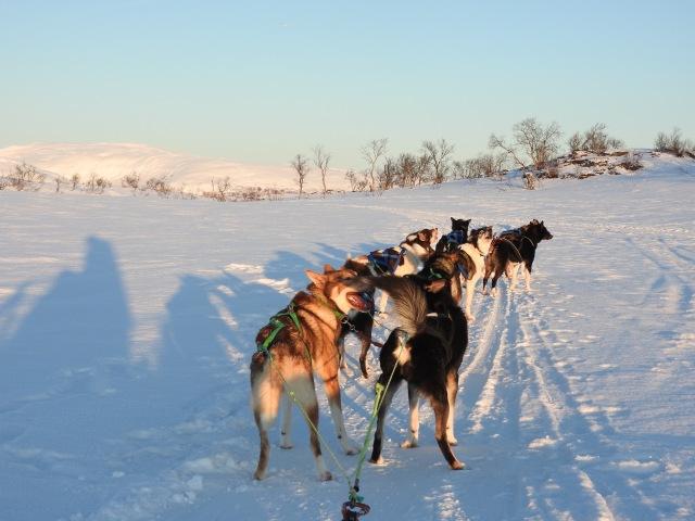 Husky Sledding Tromso Norway