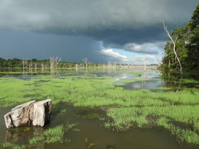 Siem Reap Province Lake.jpg